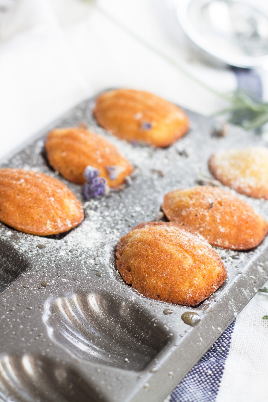 Lavender and Honey Madeleines